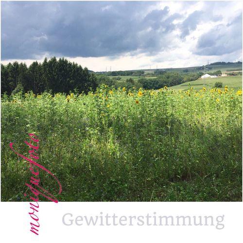💕💗 Monique52 Sonnenblumen Landschaft Hochrhein Süddeutschland