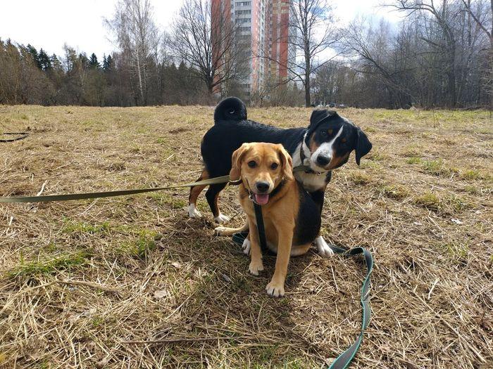 Dog Dogs Pets
