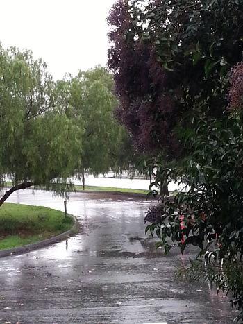 let's take a walk in the rain World Outside My Window