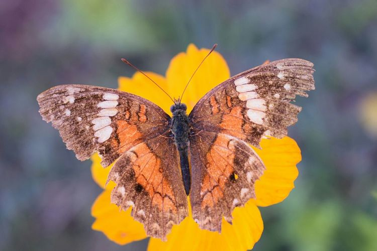 Flower Butterfly - Insect Insect Fragility Plant Nature Beauty In Nature EyeEm Selects