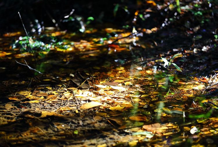 Late afternoon sunlight angling low through the surrounding tree's, to highlight a fresh water pool filled with fallen Autumn leaves. Abstract Photography Afternoon Sunlight EyeEm EyeEm Nature Lover EyeEm Gallery Nature On Your Doorstep Nature Photography Tadaa Community Autumn Autumn Colours Beauty In Nature Casted Sunlight Eye4photography  Focus On Foreground Fresh Water Leaf Leaves Light And Shadow Nature Naturelovers Outdoors Pooled Water Streamzoofamily Tranquil Scene Tranquility