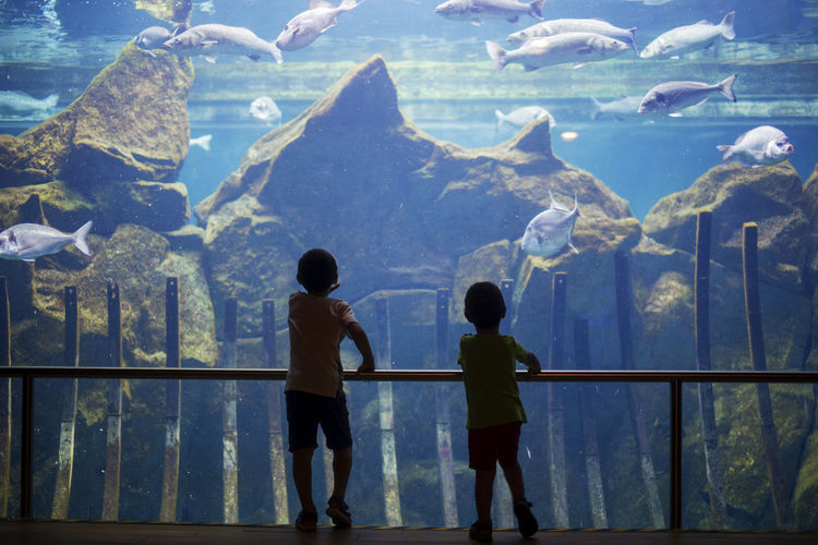Rear view of boys looking at fish in aquarium