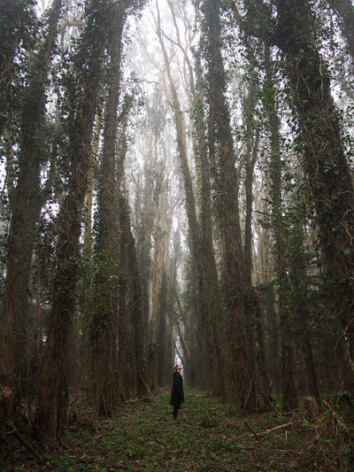 Man Standing On Footpath Amidst Trees In Forest During Foggy Weather