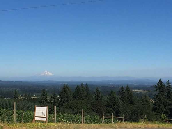 MtHood MtHoodOregon Winery Vineyard No People Tranquility Mountain Nature Beauty In Nature Clear Sky Landscape