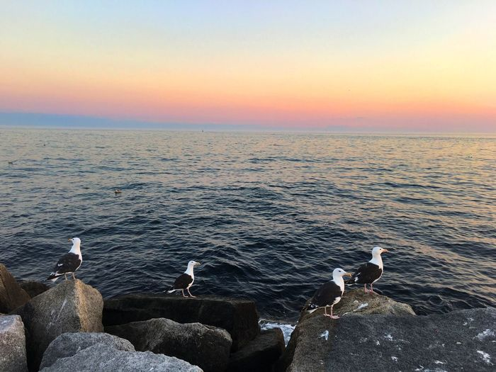 Seagulls on rocks by sea against sky during sunset