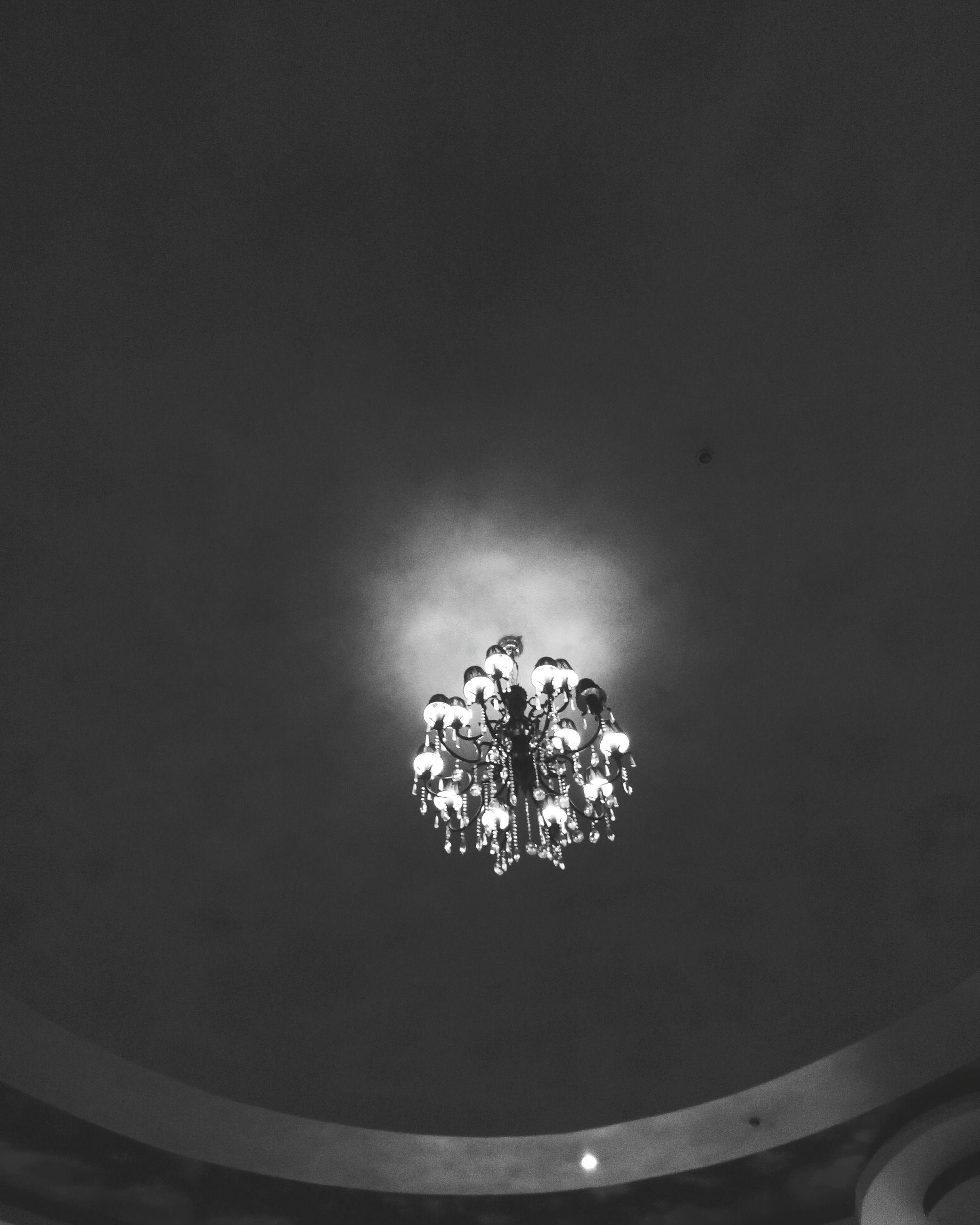 no people, illuminated, flower, indoors, night, low angle view, studio shot, close-up, nature
