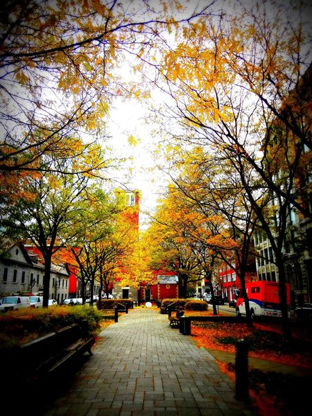 Montreal Canada No People Shades Of Tree Road Benches Yellow Leaves