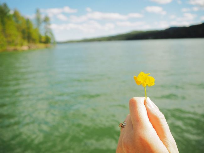 Beauty In Nature Flathead Flatheadlake Flower Focus On Foreground Holding Human Finger Kalispell Montana Leisure Activity Lifestyles Montana Outdoors Person Personal Perspective Petal Single Flower Yellow