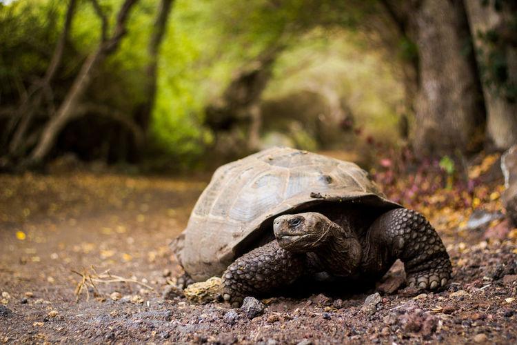 Close-up of tortoise on ground
