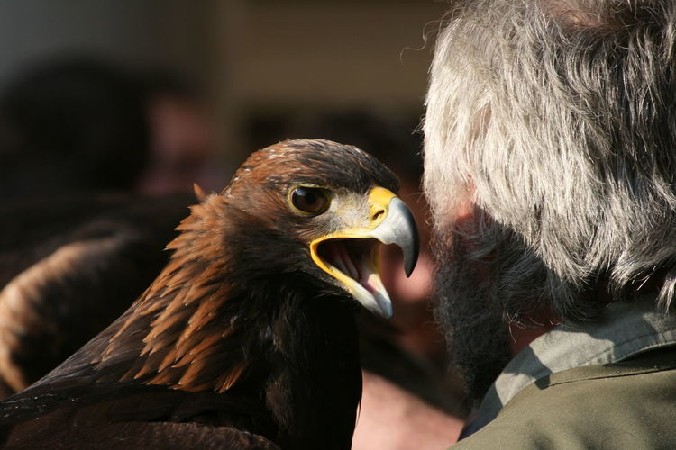 Golden Eagle and Falconer Animal Communication Animal Themes Animal Wildlife Animals In The Wild Bird Bird Of Prey Close-up Communication Day Falconer Falconry Focus On Foreground Golden Eagle No People Outdoors Portrait