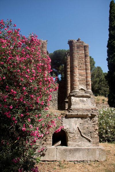 Ancient Ancient Civilization Architecture Clear Sky Flower History Nature Pompei Scavi