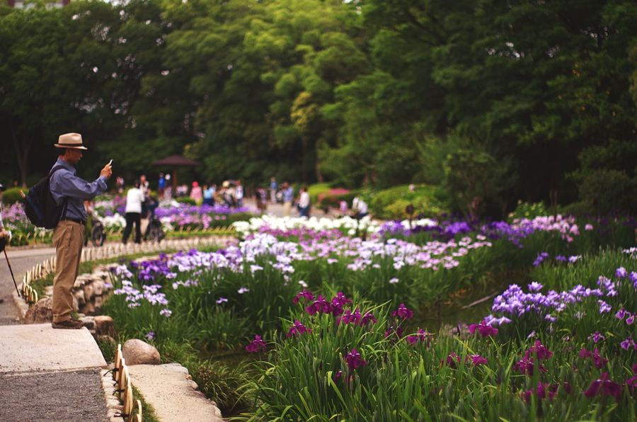 Flowers The Traveler - 2015 EyeEm Awards Getting Inspired Light And Shadow Japanese Traditional Garden Plants Iris Japanese Culture Japanese Garden EyeEm Nature Lover at 城北公園