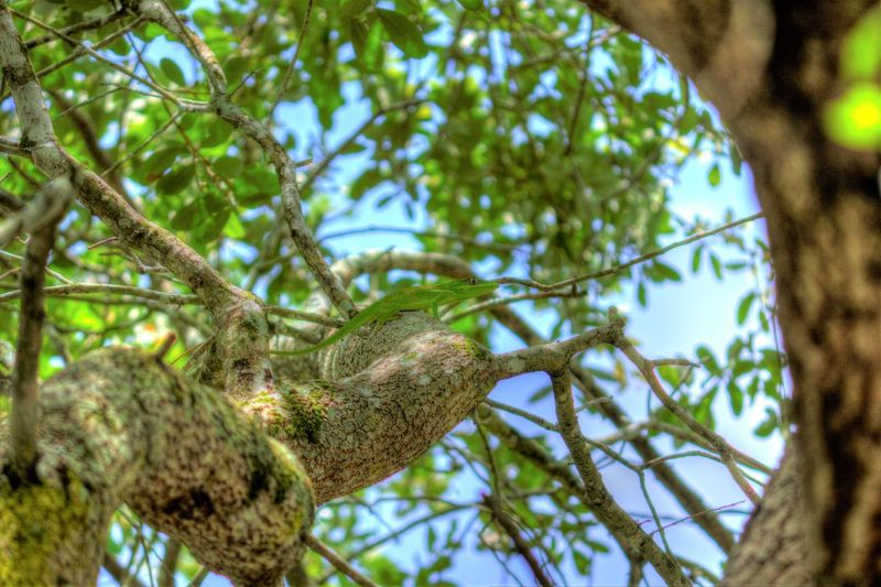 Happy Lizard Chilling ✌ Trees And Nature Sunlight Color Photography Awesome Colors Hdr_Collection