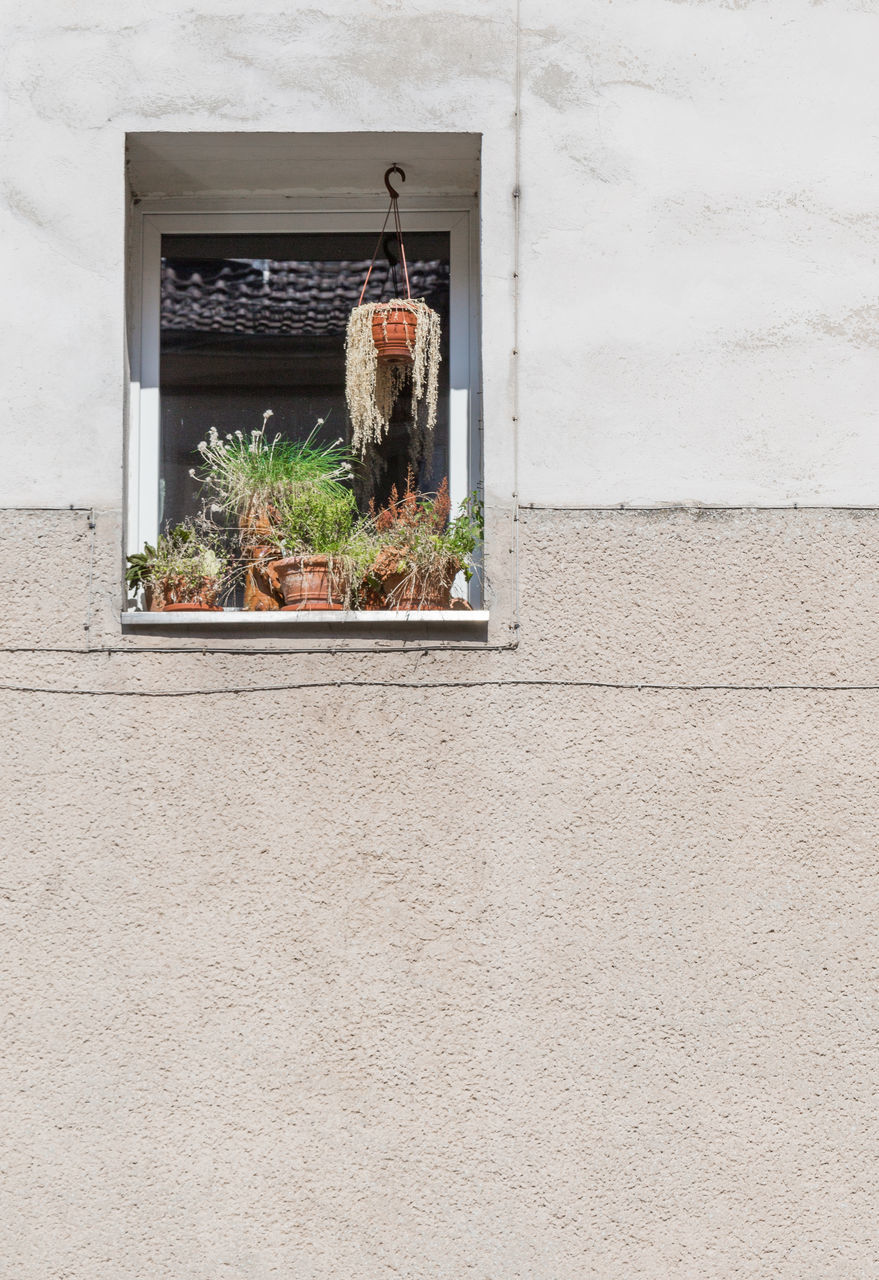 architecture, plant, window, growth, building exterior, no people, built structure, day, outdoors, window box, nature