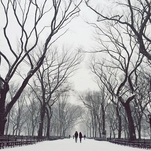In Search Of Incredible Deepfreeze The Best Of New York