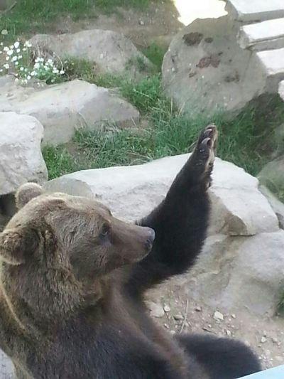 Der Bär Hat Spaß:)