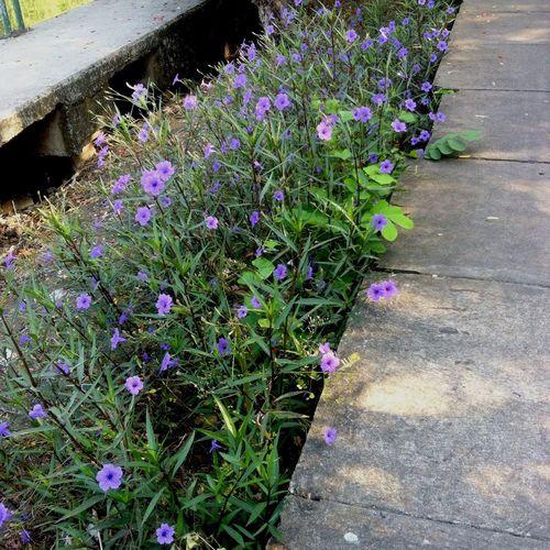 Flowers for u   cr. Sacpx Bangkok Thailand.