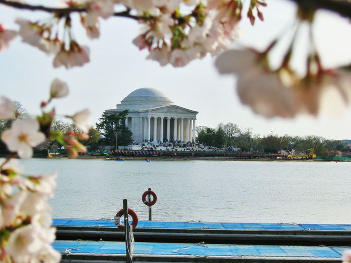 Close-Up Of Cherry Blossoms Over Tidal Basin Against Jefferson Memorial