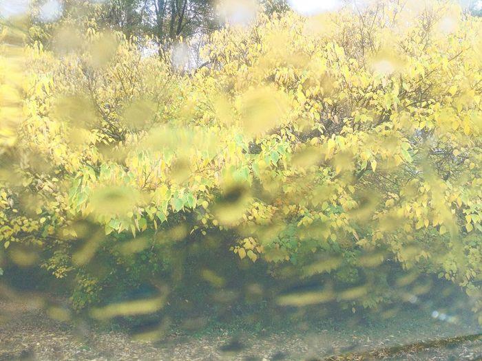 Nature Growth Tree Beauty In Nature Outdoors Botany Season  EyeEmBestPics Plant Fall Rain Raindrops Window Shot