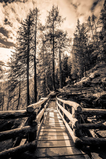Wooden boardwalk amidst trees in forest