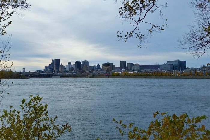 Montreal viewed from Saint-Helen's Island 🌇 Architecture History Montreal, Canada Canada Quebec City MTL Autumn Branch Sky Day Trees Cold Temperature Blue Scenery Water Fleuve Saint-Laurent Montréal Vieux Port Port Vieux Port De Montréal Island Mtlshots Mtlphoto EyeEmNewHere