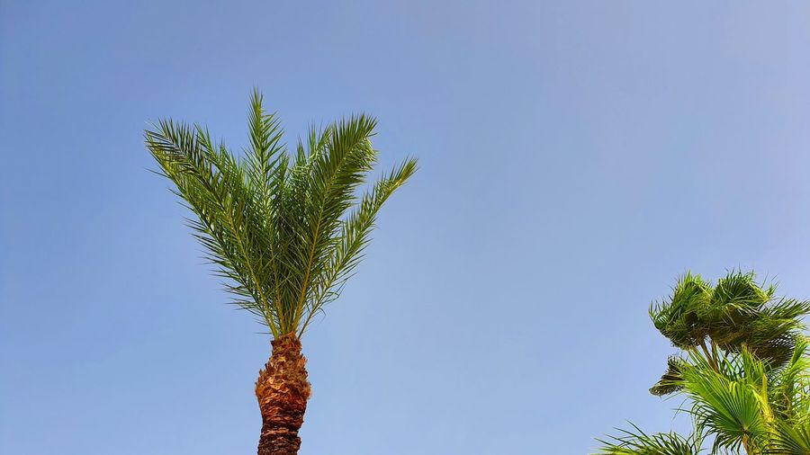 Palmtrees and
