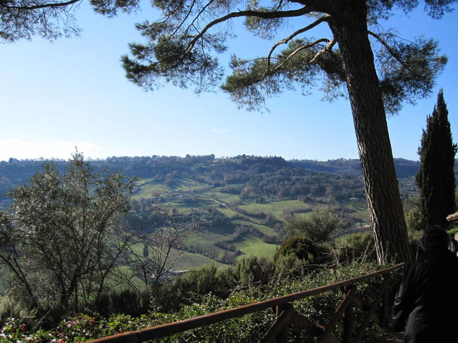 Orvieto, Italy Travel Travel Photography Traveling Beauty In Nature Branch Day Forest Growth Hill Towns Italian Italy Landscape Mountain Nature No People Orvieto Outdoors Scenics Sky Travel Destinations Tree Tree Trunk