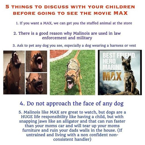 Always do your research and be honest about your lifestyle. I've work with dogs on a daily basis and am taking my time on learning more and varied methodologies in dog training. I will not own a mal right now. I certainly wouldn't own one from someboppurtunist breeder who doesn't know what their doing. Do you work 9-5 with a two hour commute daily? Never owned a dog before? A dog like a mal needs daily practice of work! Dont get a mal! Regram @refinedk9llc 👌 ----------🐺Find us on Facebook👉 https://www.facebook.com/TheRefinedK9DogTraining 🇺🇸 Our Website👉 www.therefinedk9dogtraining.com 🇺🇸 Twitter👉@refinedk9llc | 🐺 |Malinois Maligator Malinoislife Mal Mali Instadog Dogsofinstagram Trikospup Workingdogs Pet Girlswithmals Rawdiet Dogtraining Florida K9 Saltlife Malinoislovers Dog Dogs Gsdmalinoislove DogtraDog Instagramdogs Gofulton Nofilter Puppytraining servicedogs work malinoispuppy TeamDog Fultonstrong 🐺 🇺🇸