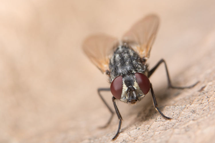 Close-Up Of Fly On Dry Leaf