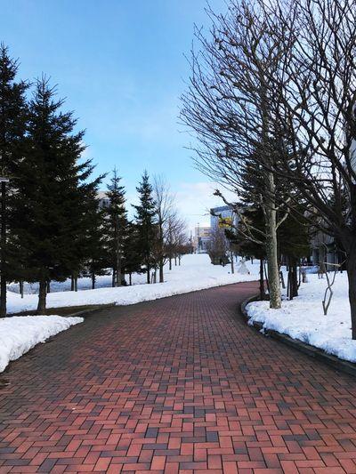 Snow Hokkaido Cold Temperature Snow Sky Nature Nice Love Blue