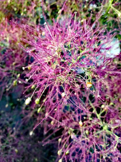 Flower Tree Purple Green