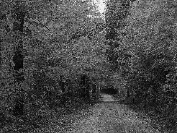 Country road Nature Eye Em Nature Lover Light And Shadow Painting With A Camera Photography First Eyeem Photo Black & White Autumn