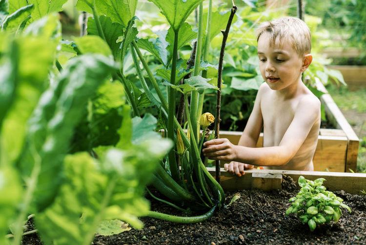 Boy looking at plants