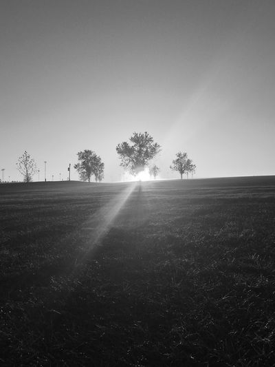 Sunrise in black and white Agriculture Beauty In Nature Clear Sky Day Field Grass Growth Landscape Nature No People Outdoors Rural Scene Scenics Sky Sunlight Tranquil Scene Tranquility Tree