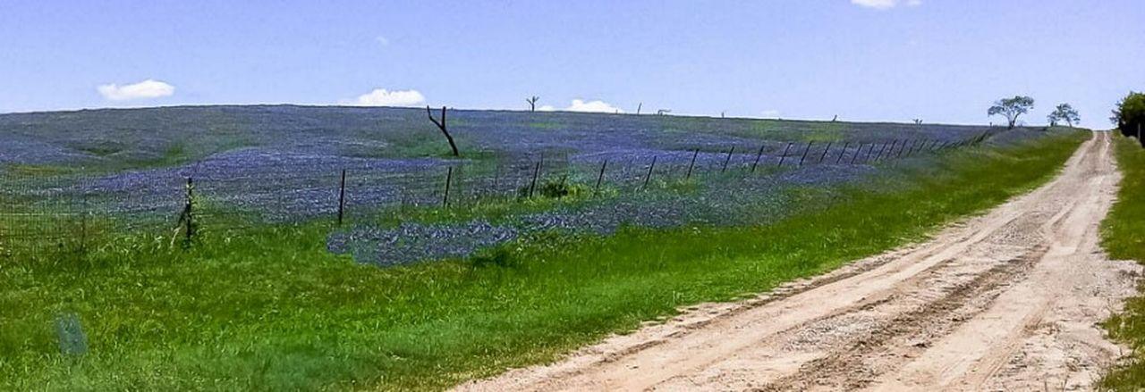 Blue Mound Blue Blueflower Bluebonnets Blue Skies Landscape Landscape_photography Ranch Spring Springtime Spring Flowers Spring Landscape Eye4photography  Ladyphotographerofthemonth Tadaa Community Showcase March March Showcase EyeEm Gallery EyeEm Best Shots Minimallandscape Minimal Ennis Ennis, Texas Texas USA