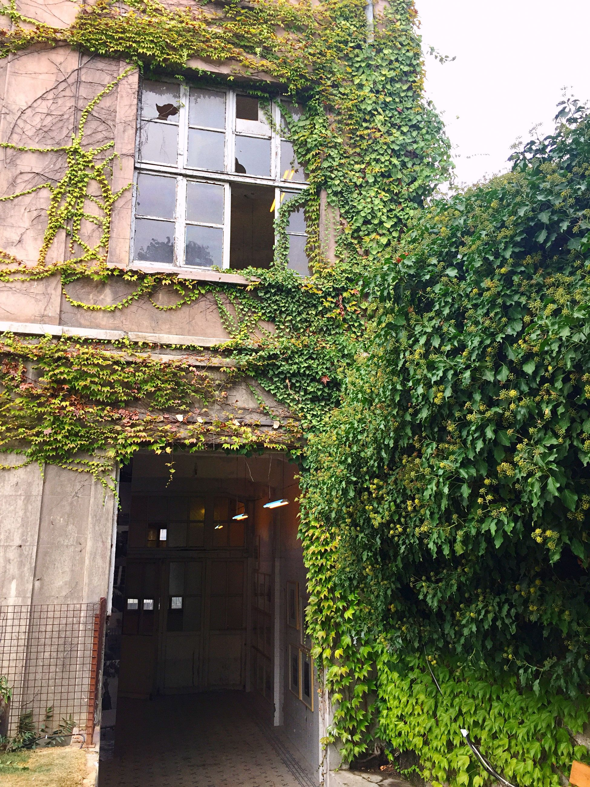 architecture, built structure, building exterior, window, growth, plant, ivy, tree, low angle view, green color, house, creeper plant, creeper, outdoors, day, overgrown, green, growing, no people