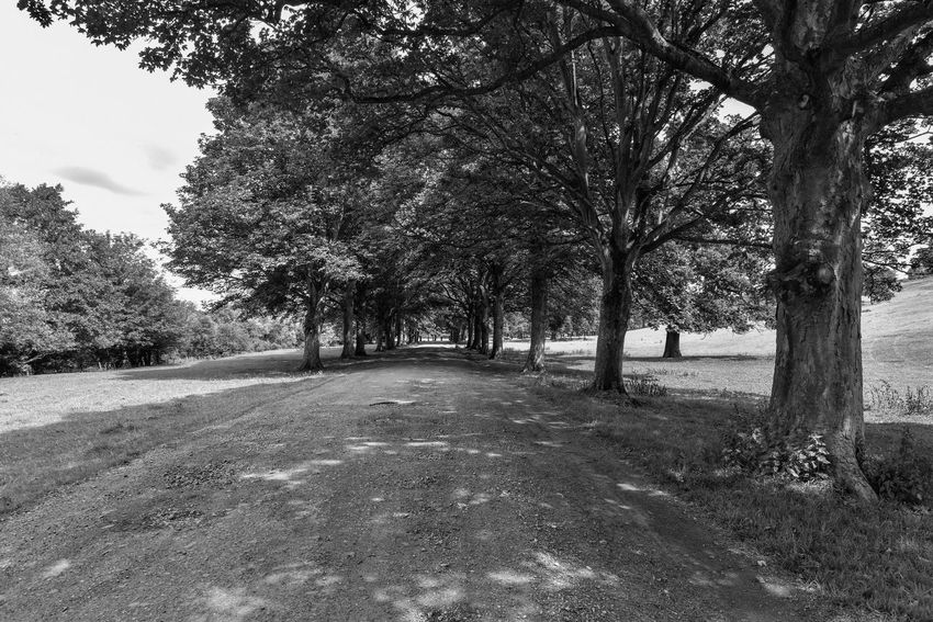 Nikon Walking Blackandwhite Photography Black & White Blackandwhite Countryside EyeEmBestPics Trees Eye4photography  Nature Photography Nikonphotography Landscape_Collection Tree Plant Nature Day Growth No People Tranquility Beauty In Nature Landscape Tranquil Scene The Way Forward Diminishing Perspective Sky Scenics - Nature