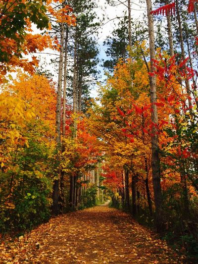 Peace No People Landscape Tranquility Tree Area Nature Tranquil Scene Forest Autmncolors Beauty In Nature