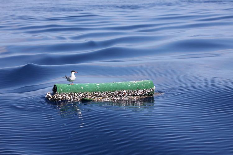 This year seen on vacation - Pico Azores Birds Nature On Sea