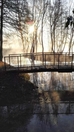 Magical Places Mist Risorgive Tree Branches Trees And Sun Branches And Sky Morning Mist Misty Waters Misty Morning Bridge - Man Made Structure Bridge Beautiful Nature Beautiful Place Peaceful Place