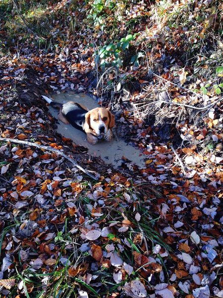Dog Hunting Dear Wassup Swimming Forest Chilling Joinme? Colors Loreal Model NeverLeaving