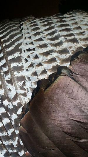 Turkey Feathers. Close Up Texture Nature Beautiful Animals The Week On EyeEm