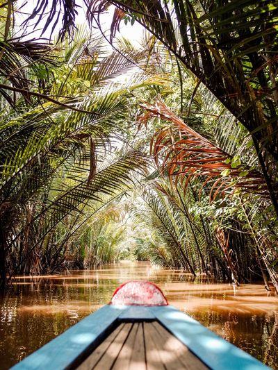 Boat on lake amidst trees in forest