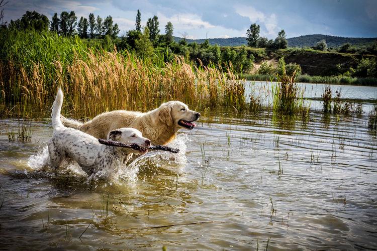 Dog on lake against sky