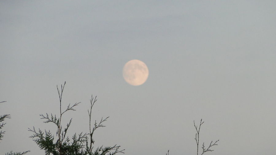 'I love you to the moon and back' Moon Fulmoon Sky Photography Photoshoot Mypassion Memories Afternoon