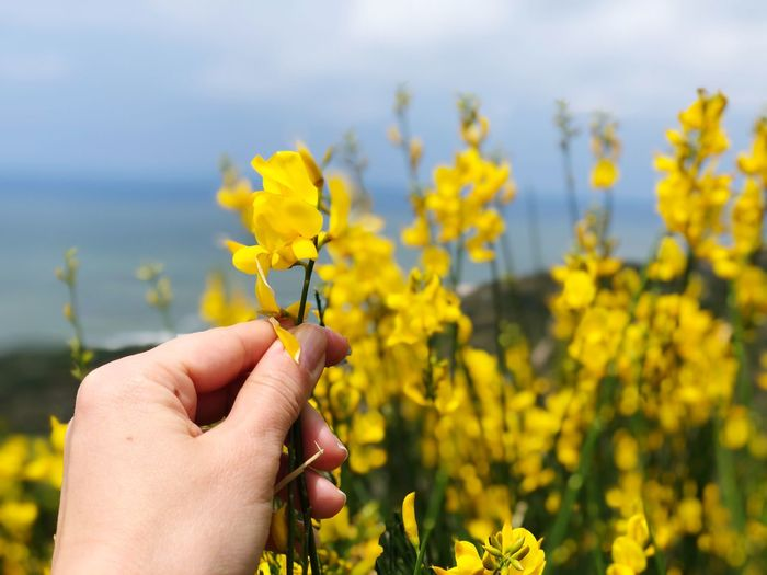 Flower Yellow Summer Spring Springtime EyeEm Selects Flower Hand Human Hand Flowering Plant Plant Yellow Focus On Foreground Fragility Human Body Part Holding Freshness Beauty In Nature Finger Body Part Nature Leisure Activity