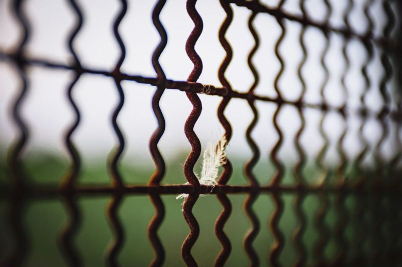 Sunset Vane Feather  Backgrounds Full Frame Pattern Protection Metal Abstract Close-up Sky Chainlink Chainlink Fence Barbed Wire Wire Mesh Grid Fence Razor Wire Rusty