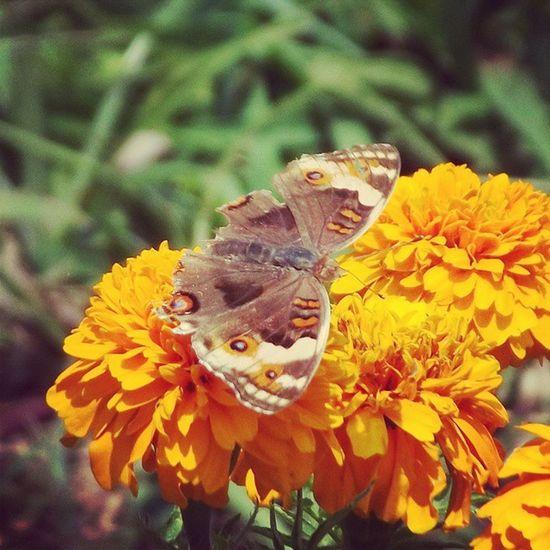 Wild butterfly. Insect Butterfly Serangga Kupukupu bunga