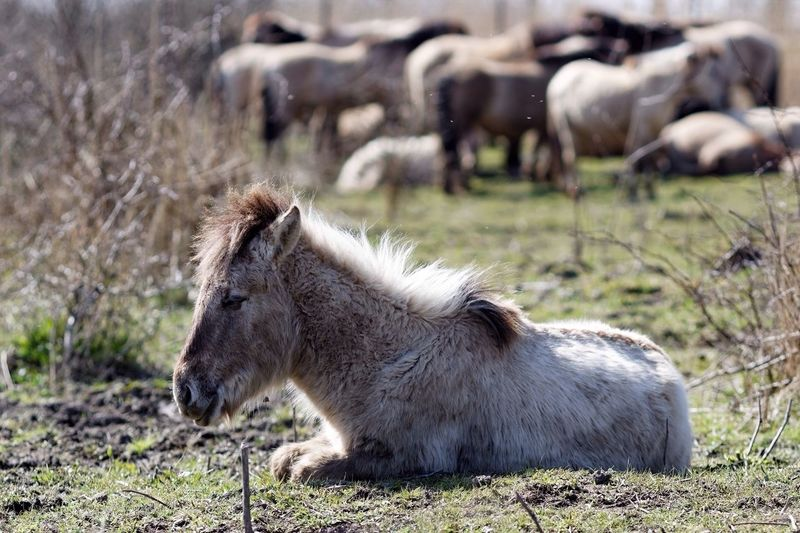 Horse At Grassy Field On Sunny Day