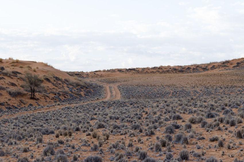 Desert Namibia Namibia Landscape NamibiaPhotography Landscape Namibia Desert Namibia Street Street